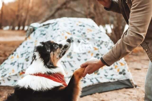 Prepare your dog for camping