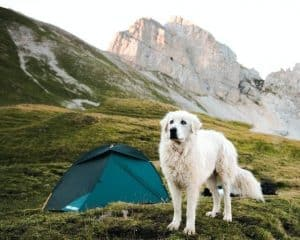 Taking dog camping for the first time