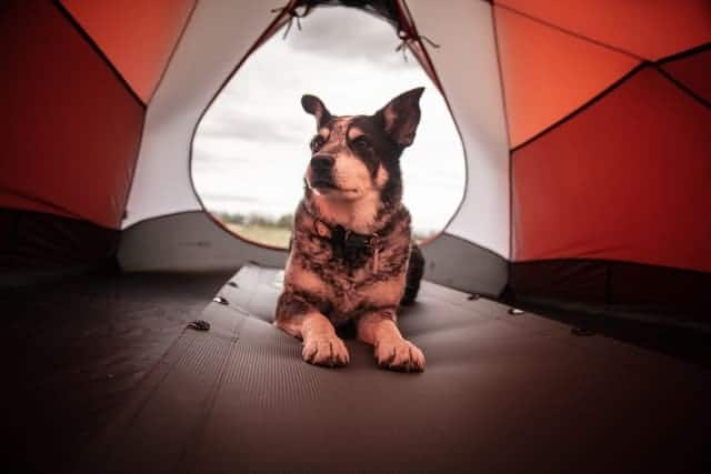 train your dog sleeping inside the tent